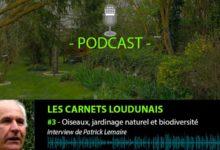 Podast. Patrick Lemaire du jardin du Tilleut à Ternay